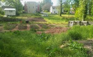 The Haven's garden