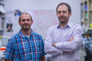 Postdoctoral researcher Anthony J. Filiano, left, and Jonathan Kipnis, chairman of UVA's Department of Neuroscience. (Photo by Sanjay Suchak, University Communications)