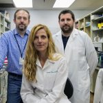UVA Identifies Brain's Lymphatic Vessels as New Avenue to Treat Multiple Sclerosis