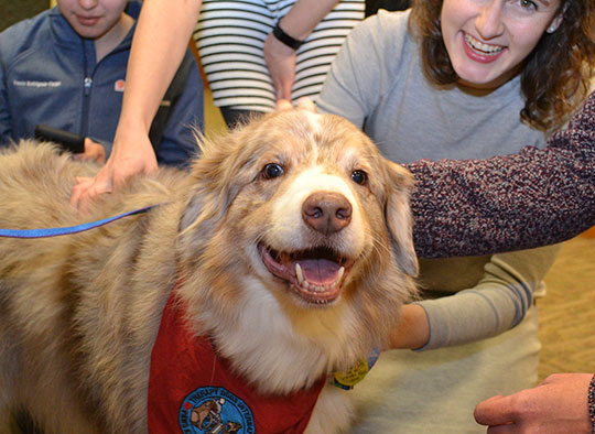 UVA medical and nursing students petting friendly therapy dog
