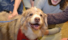 Photos: Medical and Nursing Students Unwind with Comforting Canine Companions