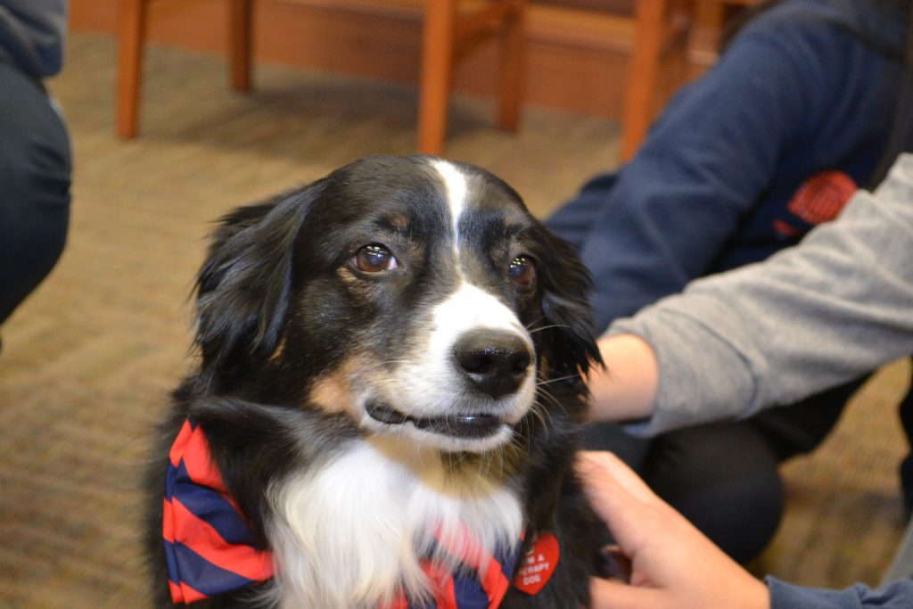 UVA medical and nursing students petting UVA therapy dog.