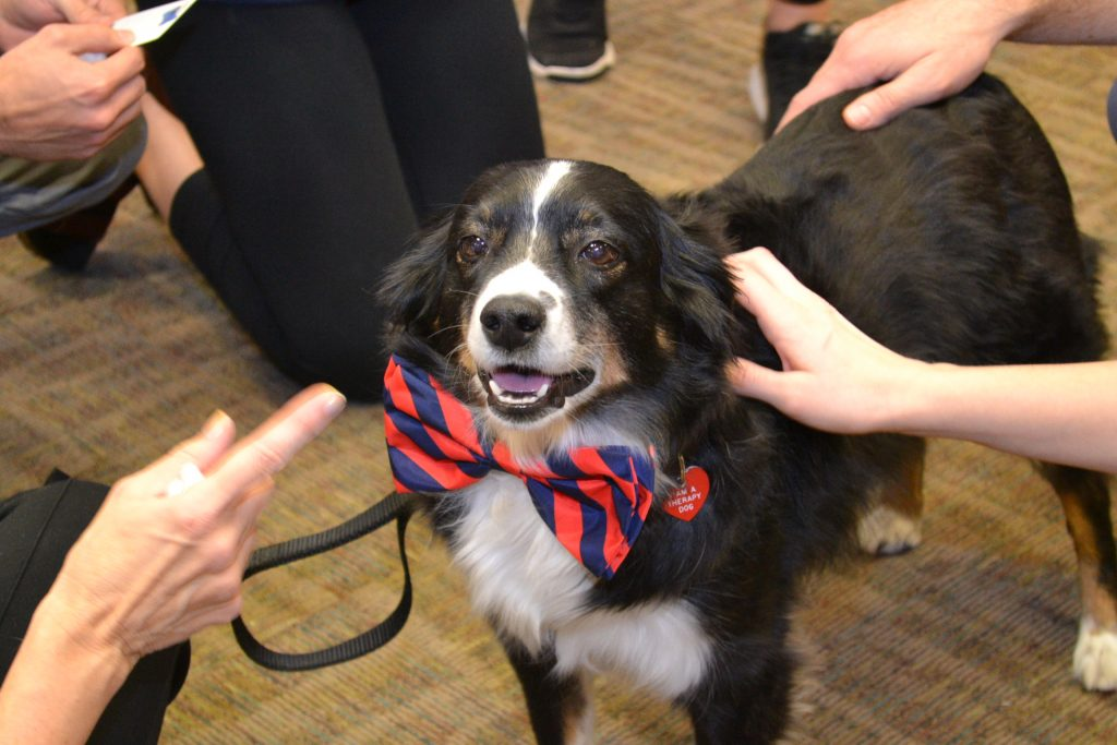 UVA therapy dog enjoying the attention of UVA medical and nursing students.