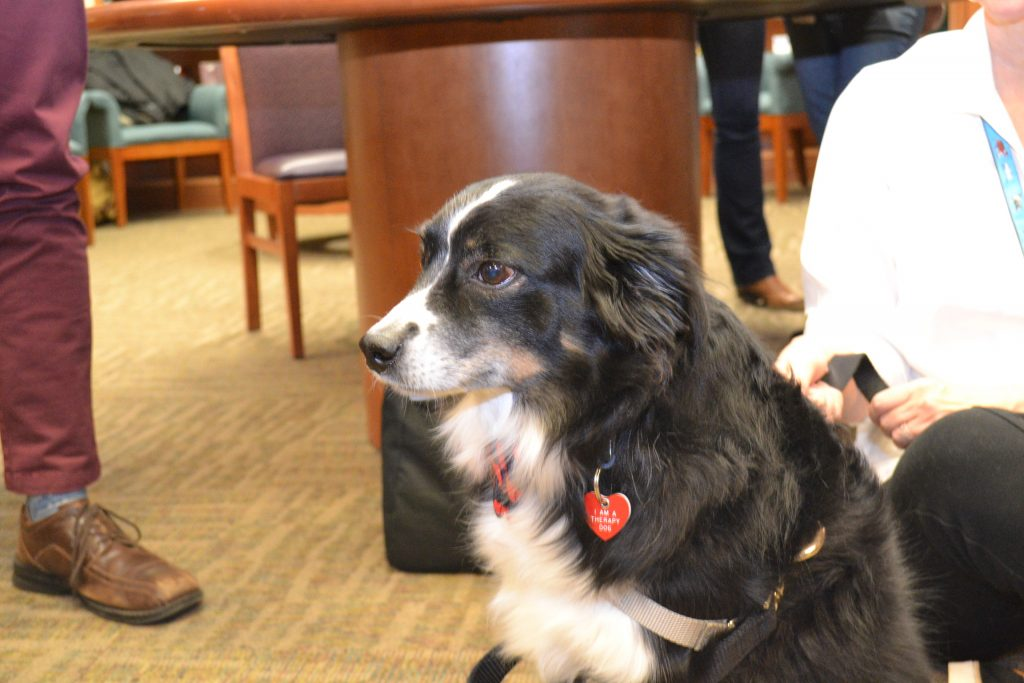 UVA therapy dog waiting for more students.