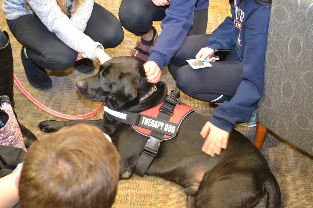 Another UVA therapy dog getting lots of enjoyable attention from students.